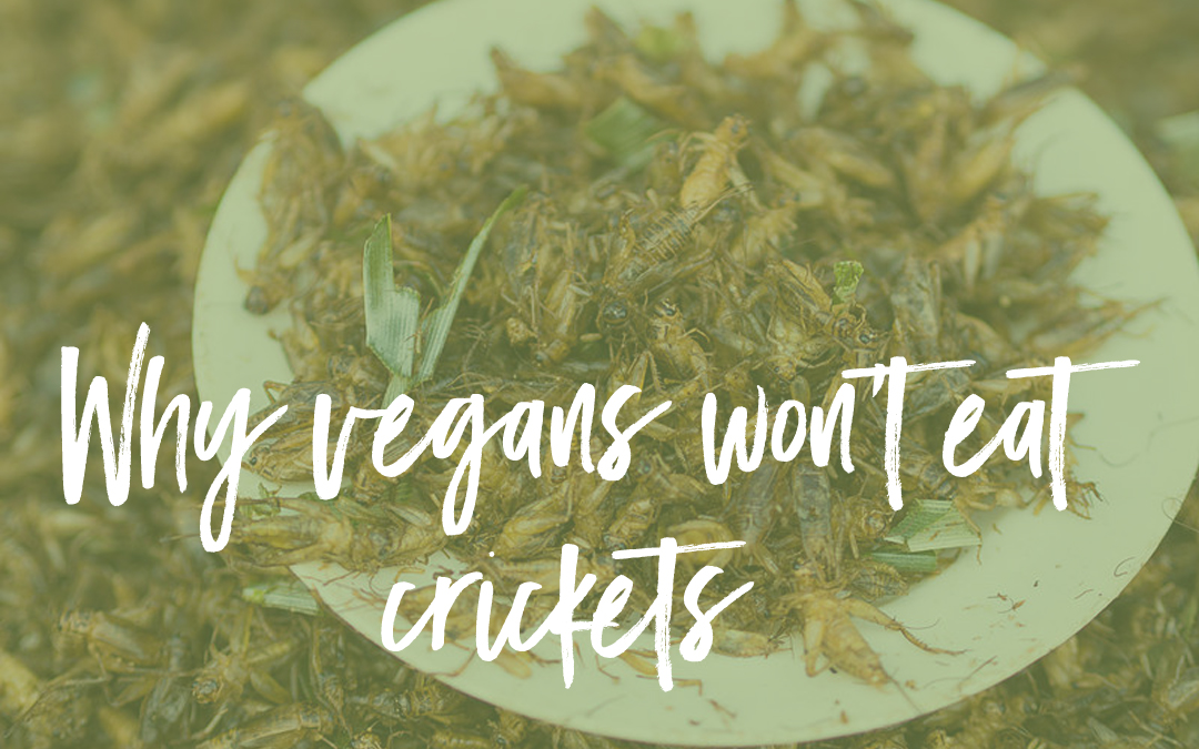 Why vegans don't consume crickets